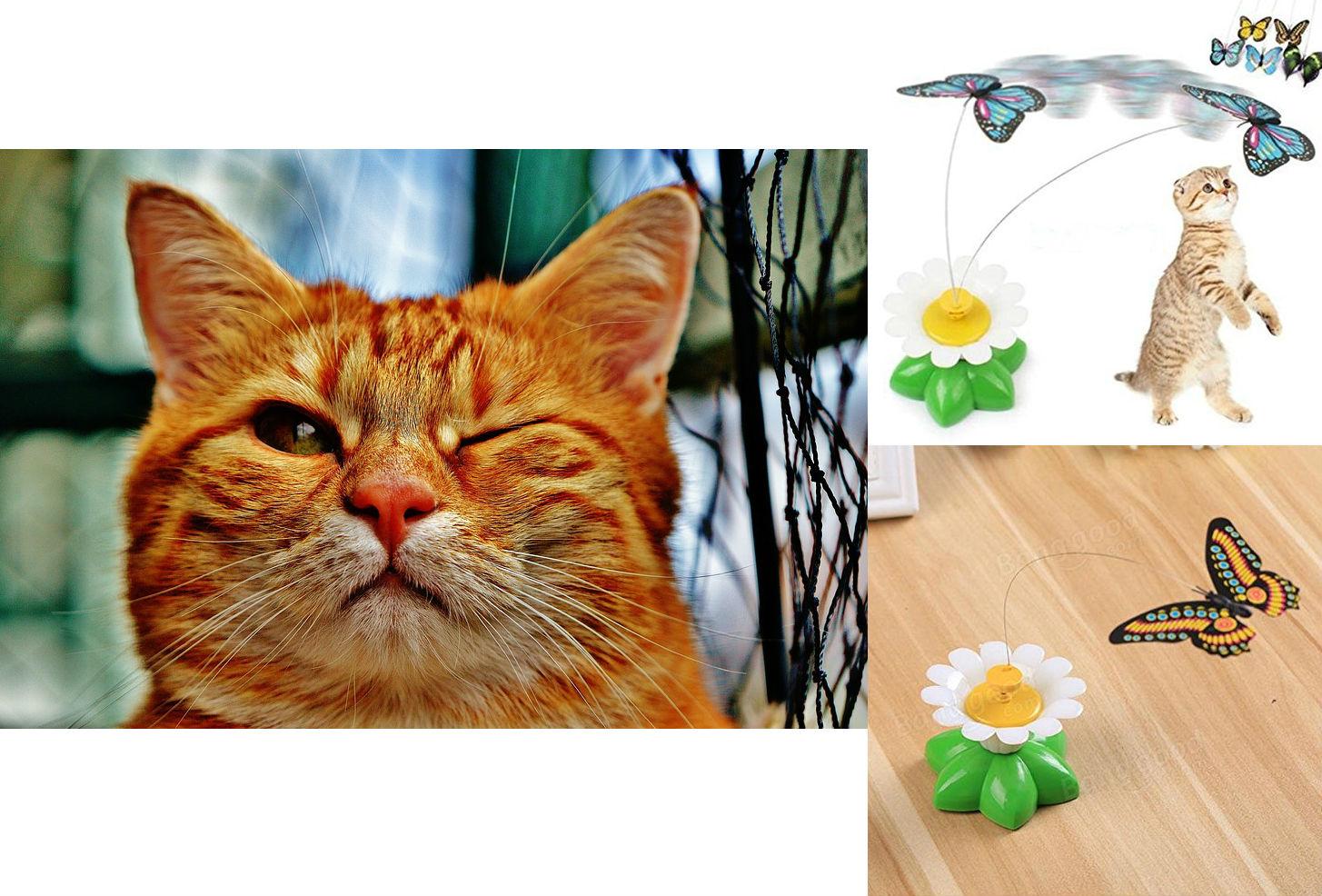 cat-1333926_960_720.jpg