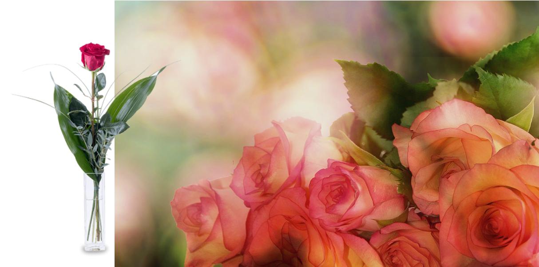 roses-3141486_960_720.jpg